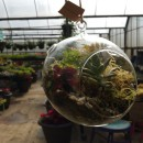 Globe Terrarium at Turners Fresh Market